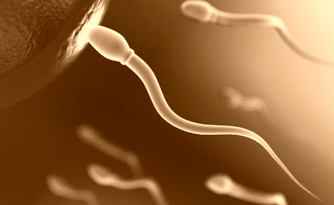 Espermatozoides y óvulos artificiales, a punto de ser realidad