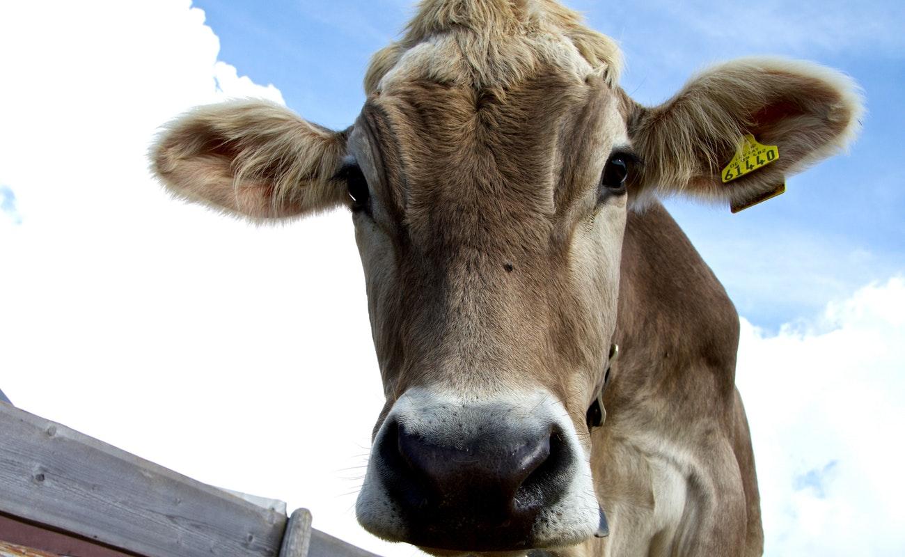 Consumo anual de carne en México asciende a unos 65 kilos por persona