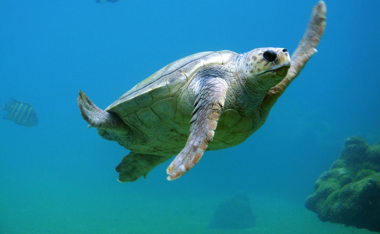 Oceanólogos consideran que no basta con sancionar por derrame de ácido en Mar de Cortés