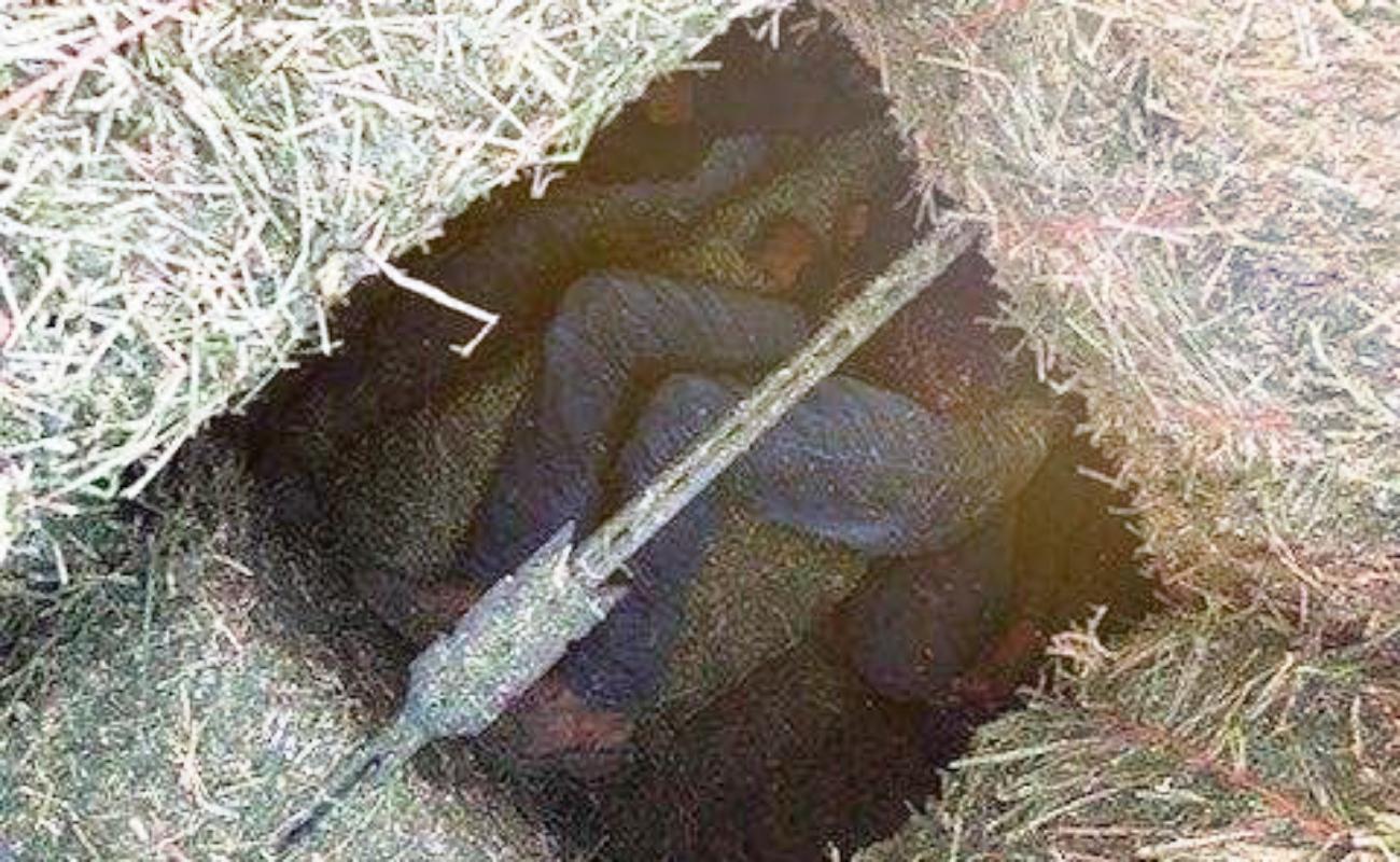 Descubren 13 mexicanos ocultos en tráiler, entre pacas de heno