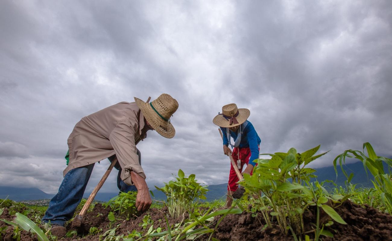 Afecta cambio climático la agricultura y su productividad