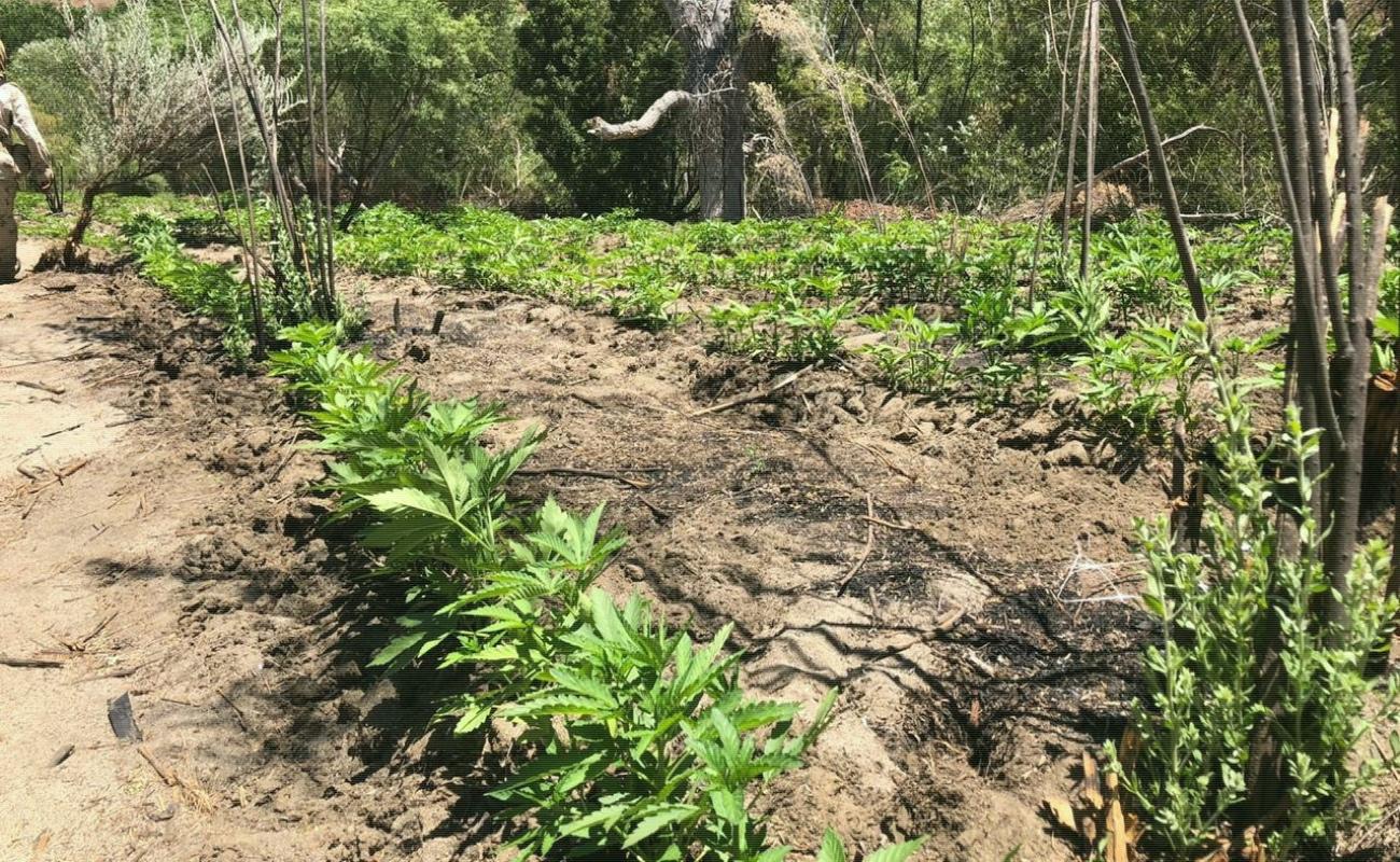 Hallan dos plantíos más en Valle de la Trinidad