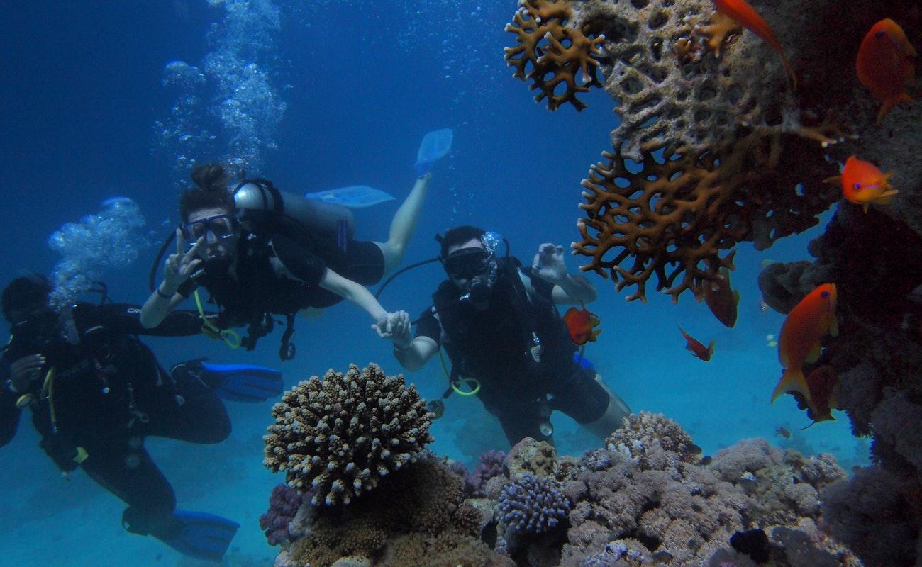 Califican a Parque Submarino de Rosarito como referente mundial para el buceo
