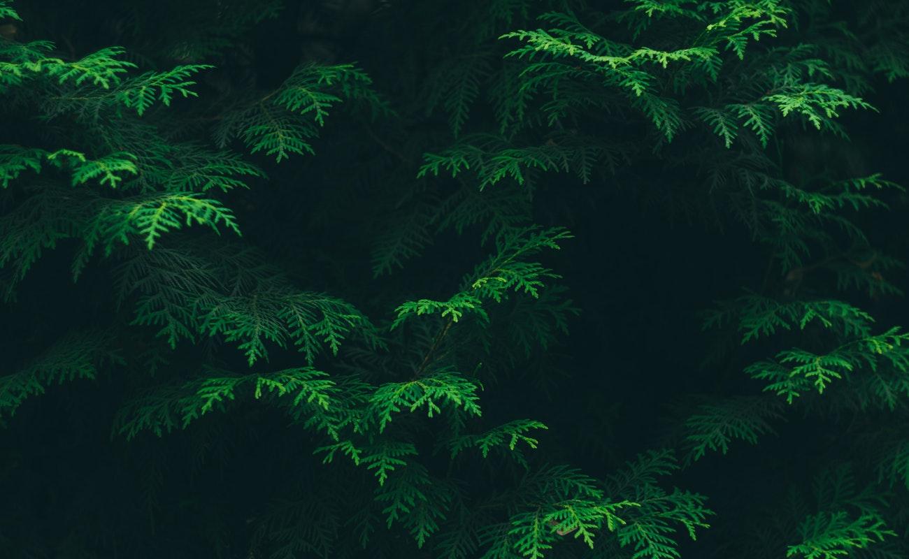 Revelan acelerada y alarmante extinción de plantas en el mundo