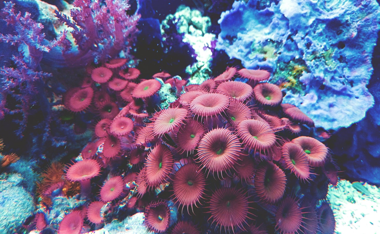 Valor de arrecifes podría caer para 2030, reporte de ONU