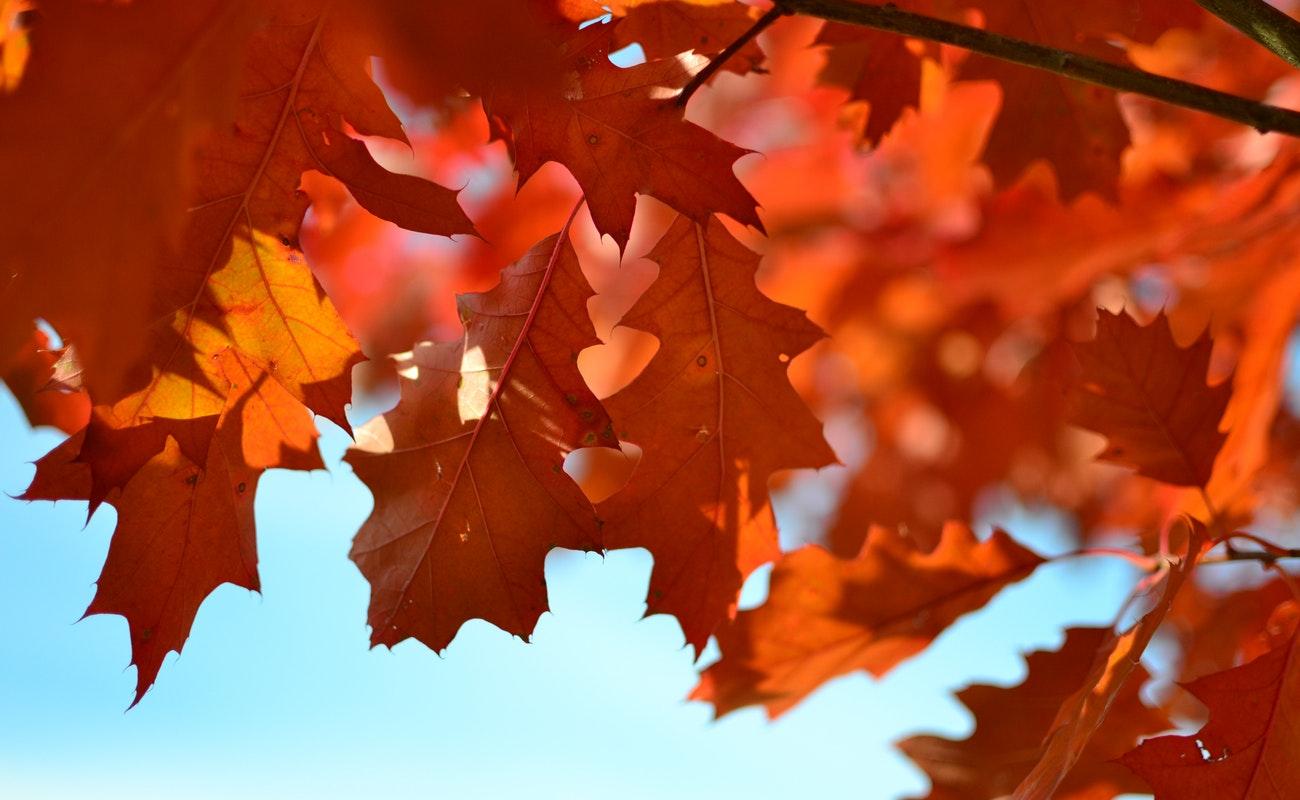 Esta noche inicia el otoño en el Hemisferio Norte