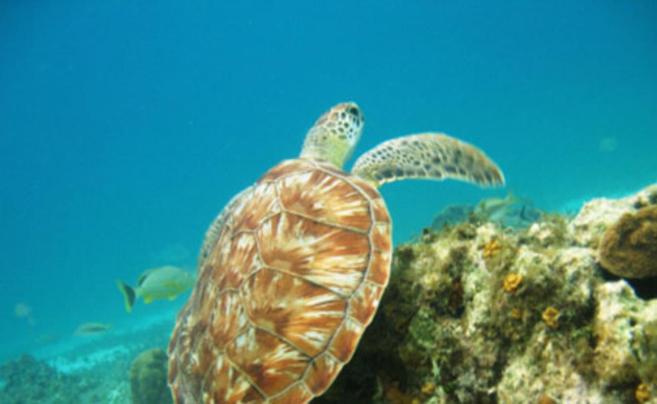 Finaliza capacitación a pescadores sobre Dispositivos Excluidores de Tortugas