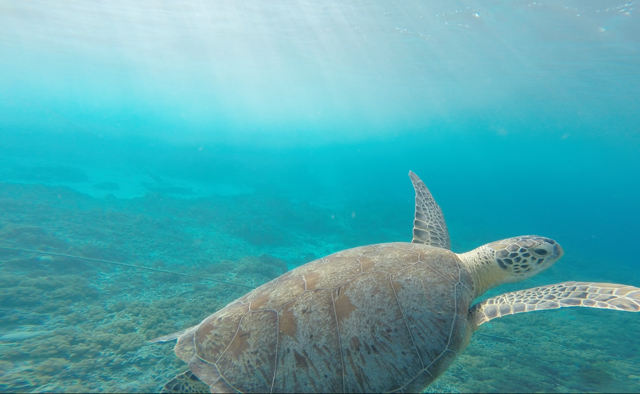 Anuncian alianza empresarial global para eliminar plásticos en océanos