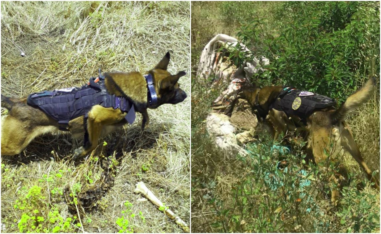 "Binomio canino ""Falco"", de la PGJE, localiza restos humanos"
