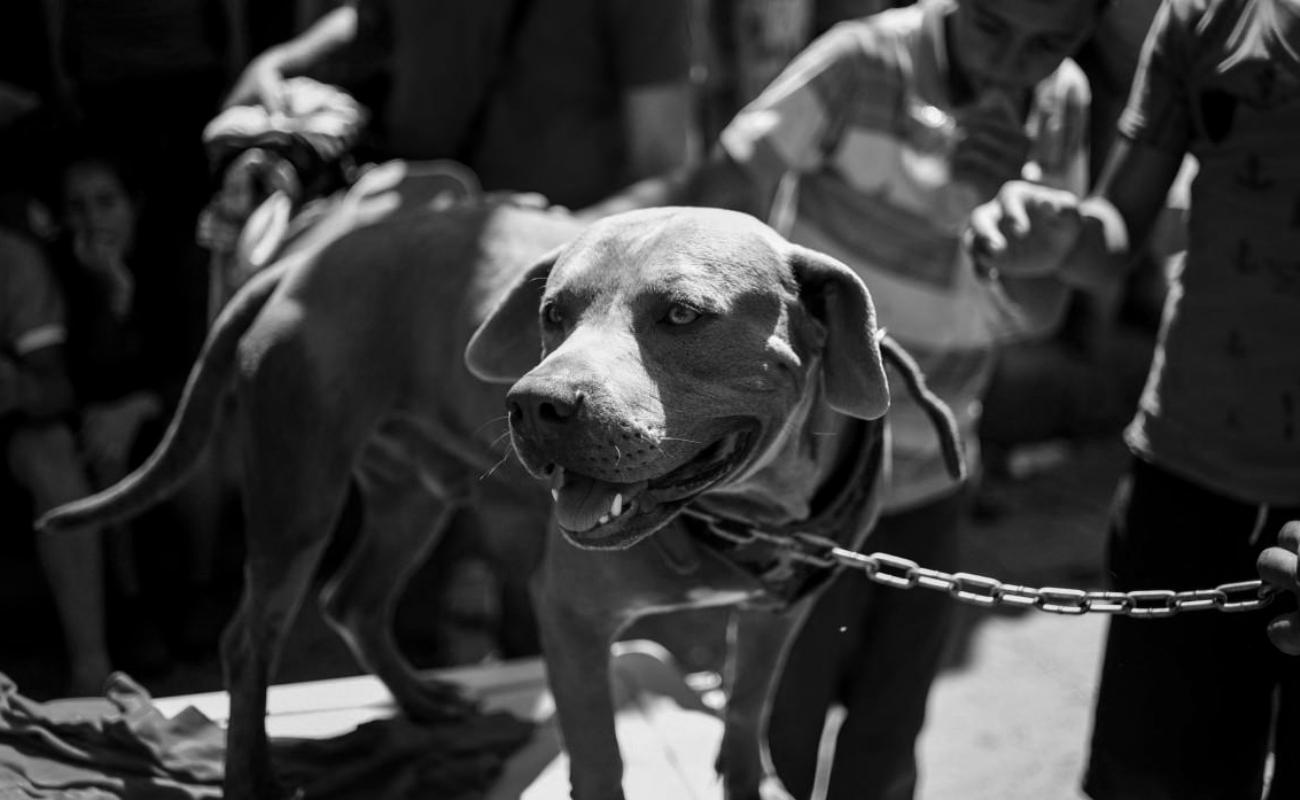 'Bolillo', el perro migrante que también busca el sueño americano
