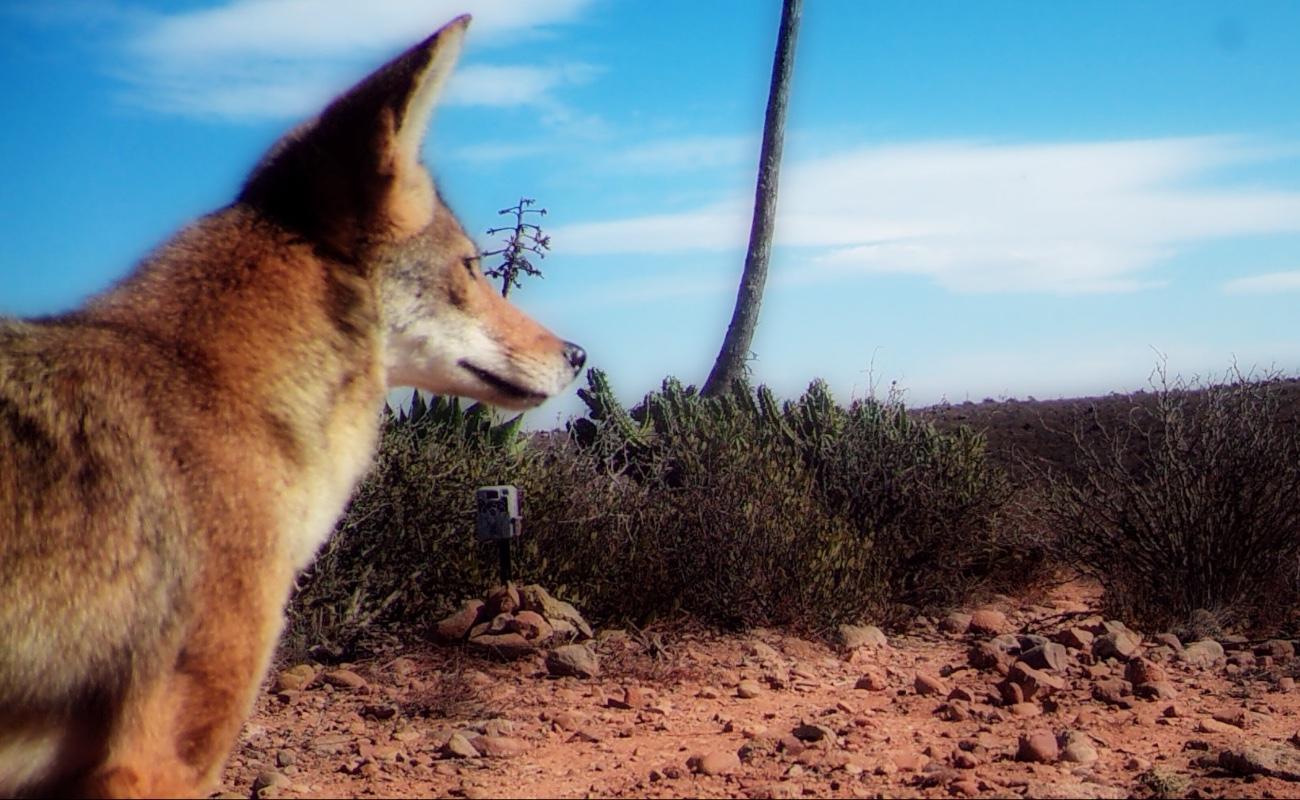 Continúan cerrados accesos a las reservas naturales en San Quintín y El Rosario
