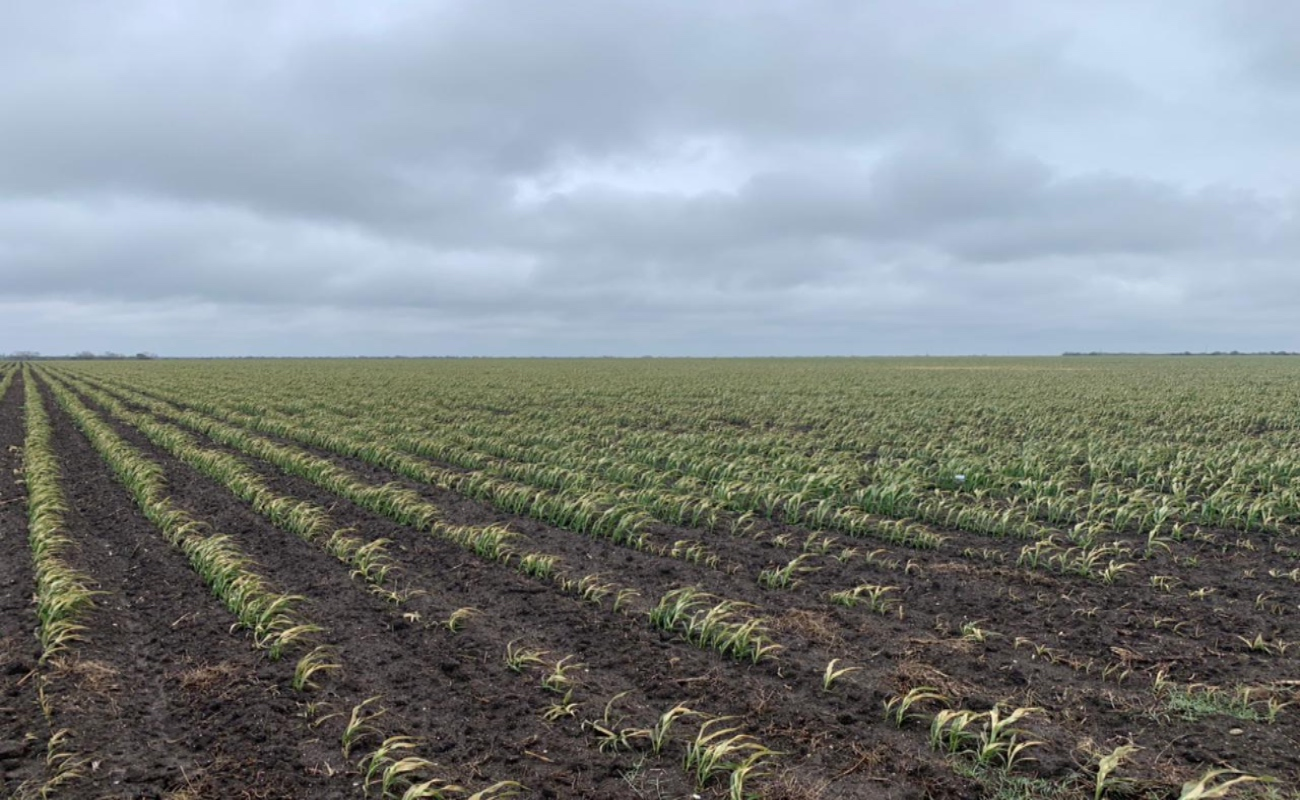 Reporta Agricultura afectaciones por frente frío y tormenta invernal